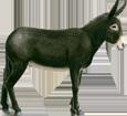 Bild von Pyrenäischer Esel